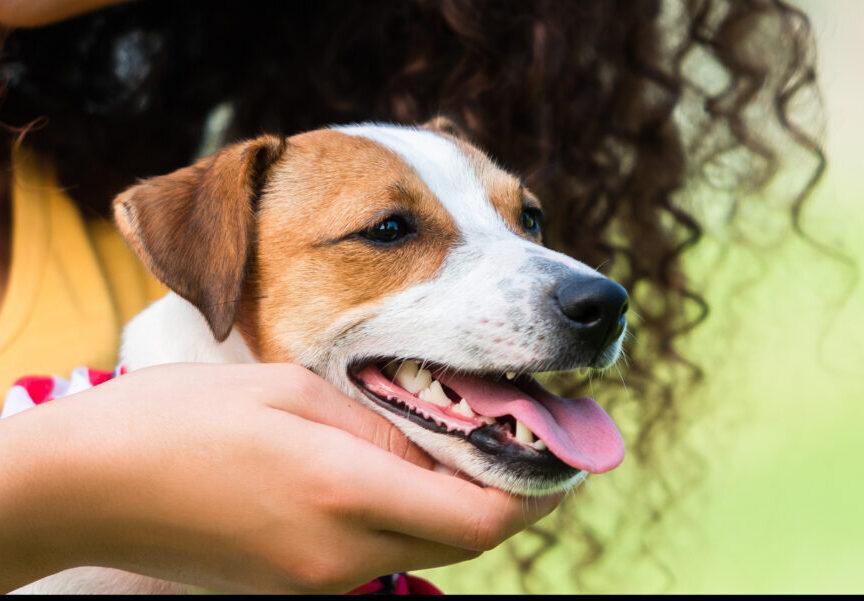 Stress und Auswirkungen auf das Verhalten eines Hundes